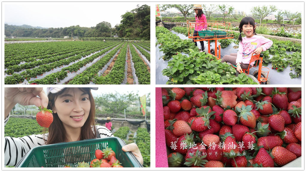 莓樂地金榜精油草莓