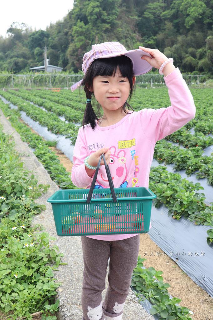 莓樂地金榜精油草莓1