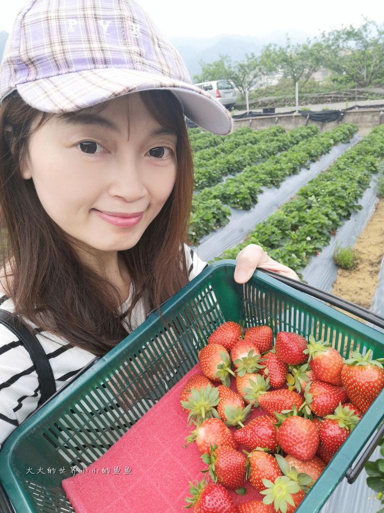 莓樂地金榜精油草莓3