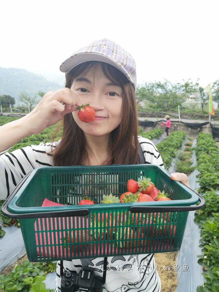 草莓_副本