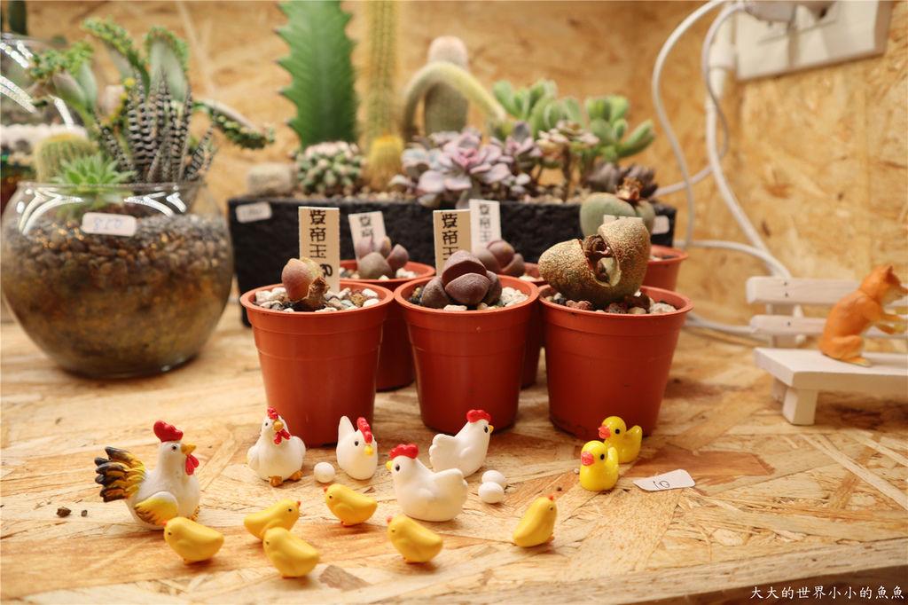 綠光花園 多肉植物 台北大安99.jpg