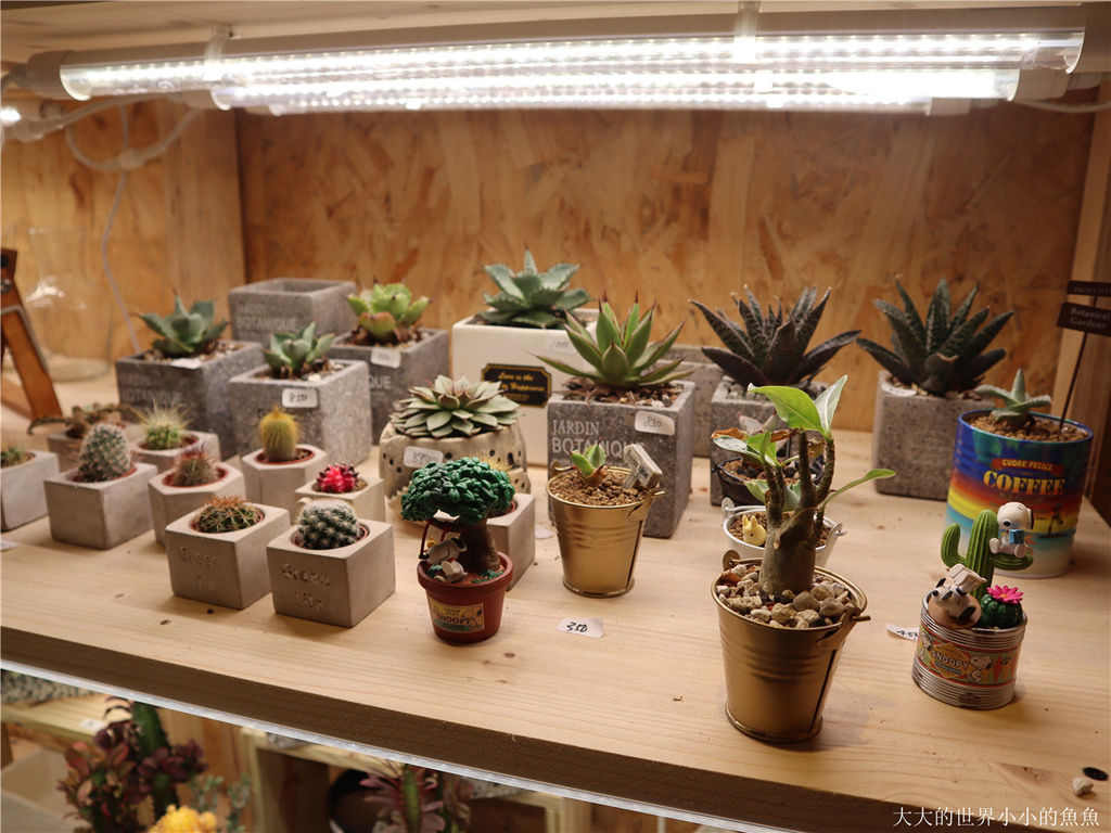 綠光花園 最療癒的植栽店35