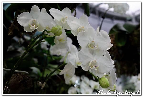 20110326 2010台北國際花博_天使生活館_021.jpg