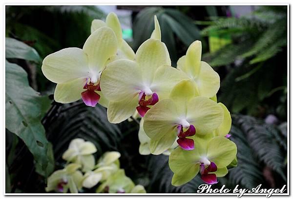 20110326 2010台北國際花博_天使生活館_030.jpg