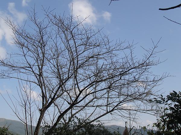 20101218 九份風景_11.JPG