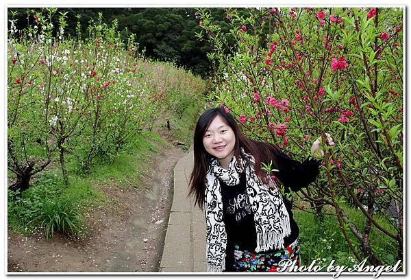 20110305 木珊杏花林_007.jpg
