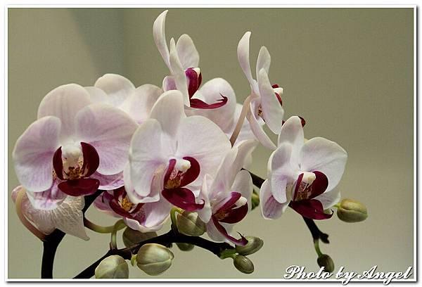 20110326 2010台北國際花博_天使生活館_012.jpg