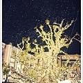 這一夜洛杉磯下起了雪.jpg