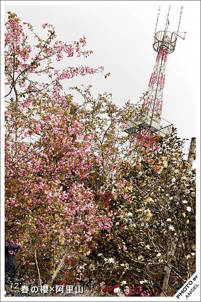 換個角度再來一張,鐵塔+櫻花有沒有多了點日本味?.jpg