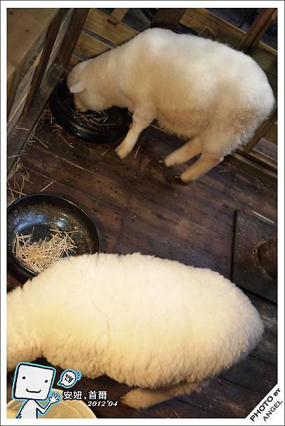 店裡養了兩隻羊是這裡最大的噱頭.jpg