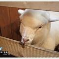 小羊好白好古錐.jpg