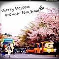 春日賞櫻最終回-首爾南山公園