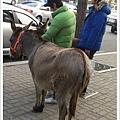 韓國人連驢子都能當寵物(驚)
