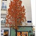 長得像壁貼的樹