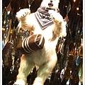 北極熊也愛LV