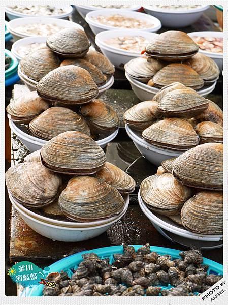好巨大的貝類.jpg