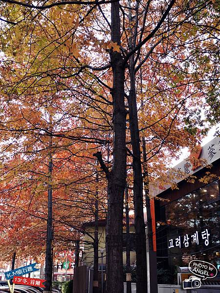 首爾街景-7.jpg