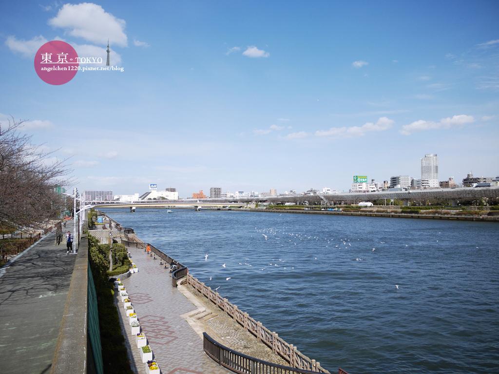 從言問橋上欣賞隅田川的美景