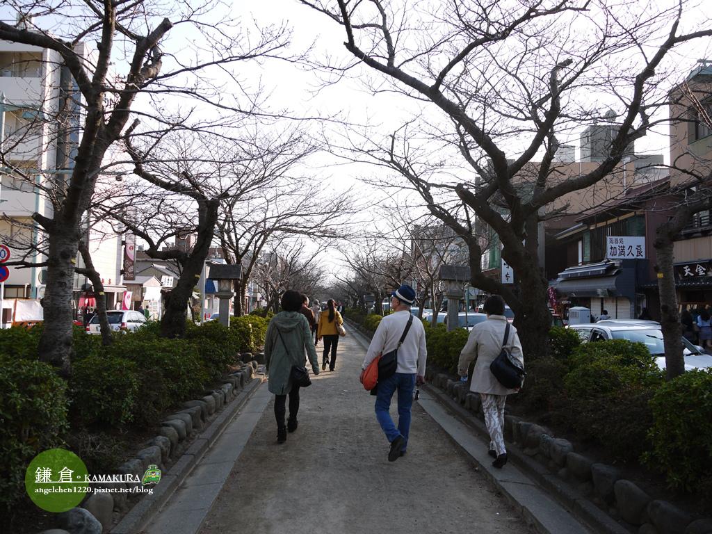 若宮大道是鎌倉主要道路.jpg