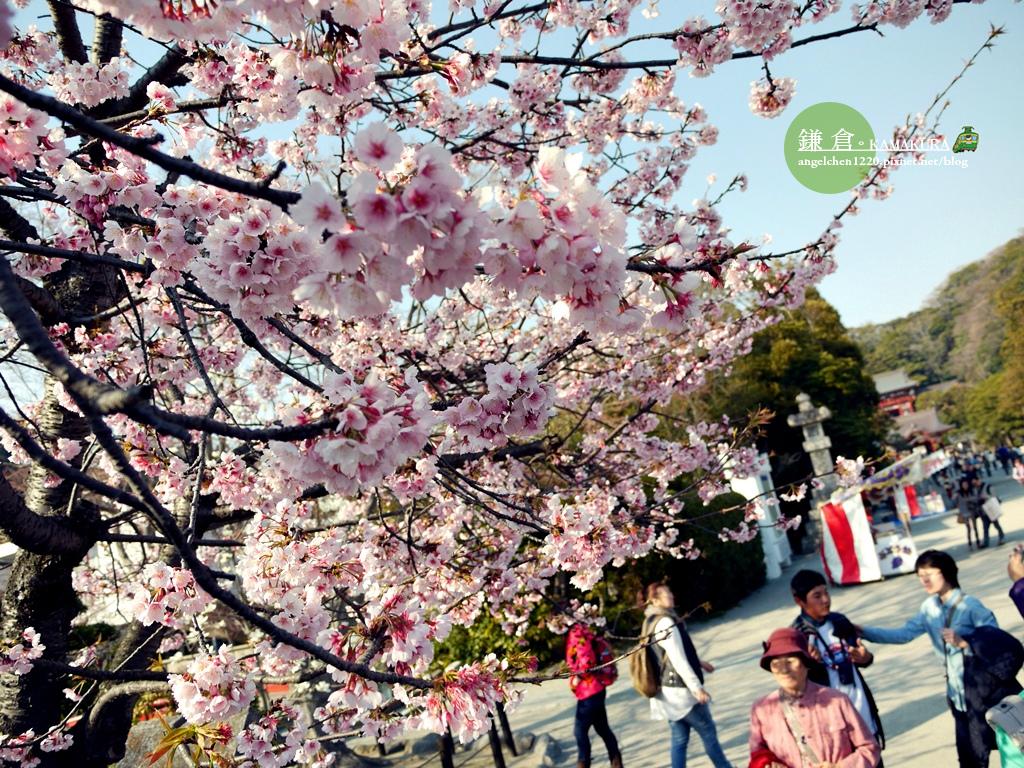 八幡宮櫻花-1.jpg
