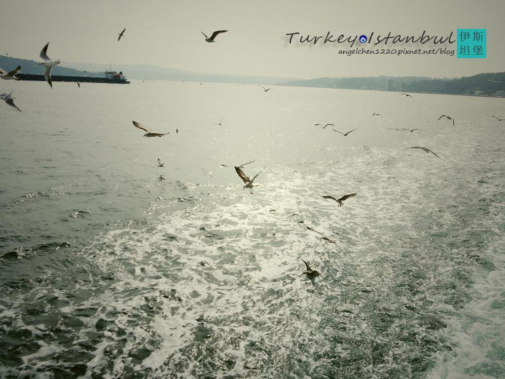 一大群海鷗.jpg