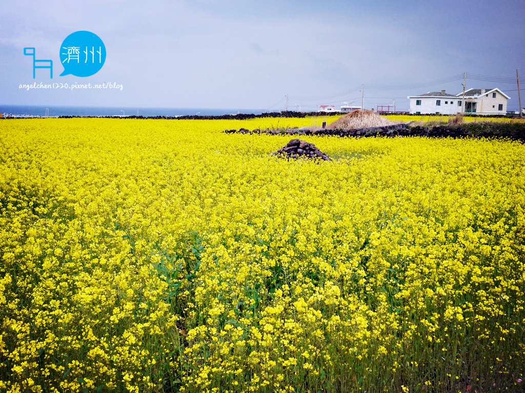 牛島油菜花-1.jpg