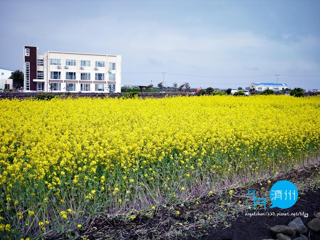 牛島油菜花-5.jpg