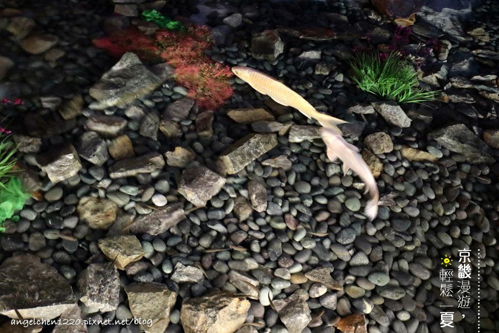 洞窟水族館-1.jpg