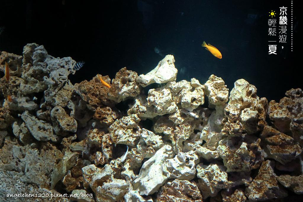 洞窟水族館-2.jpg