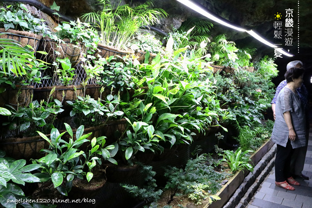洞窟植物園.jpg