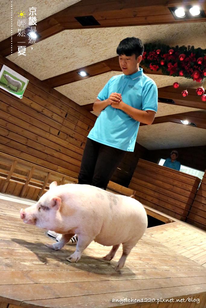 第一隻小豬HAPPY.jpg