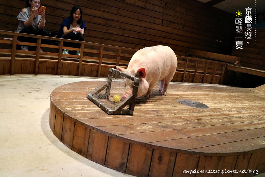 第5隻小豬踢足球.jpg