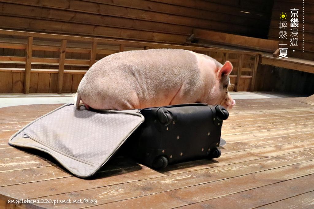 第6隻小豬會自己躲進行李箱.jpg