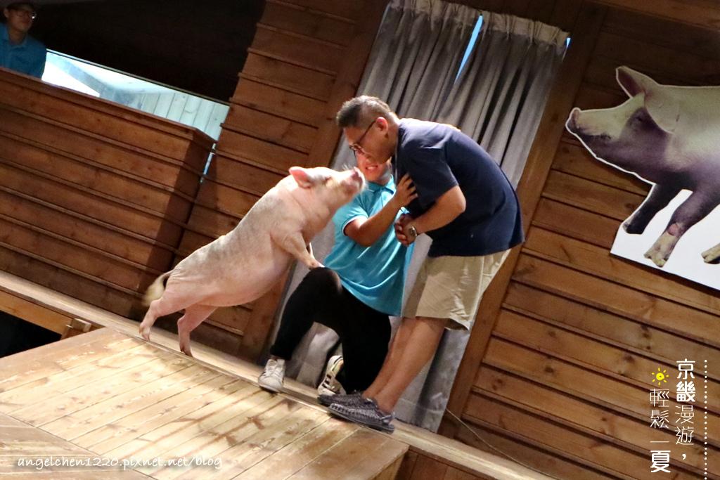 想和小豬啵啵嗎.jpg