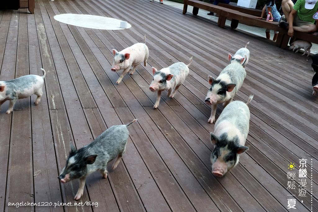 和小豬的親密接觸-1.jpg