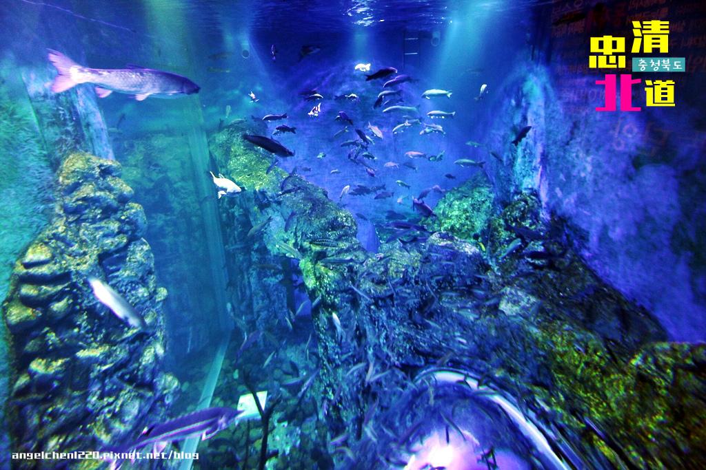 Danuri水族館-10.jpg