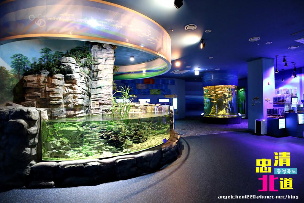Danuri水族館-17.jpg