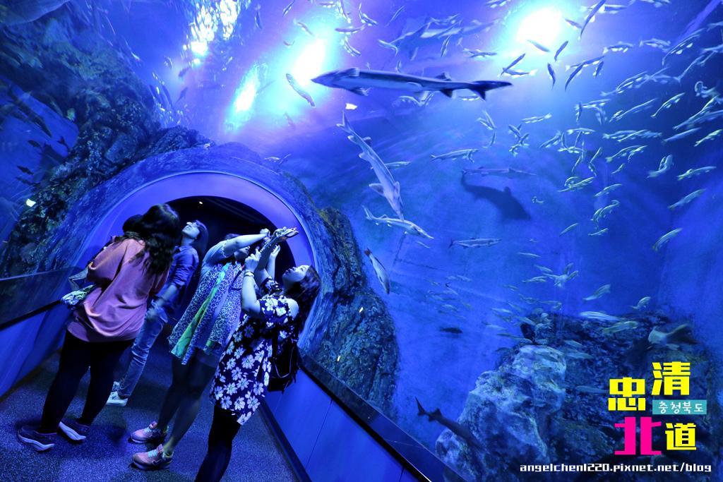 Danuri水族館-24.jpg