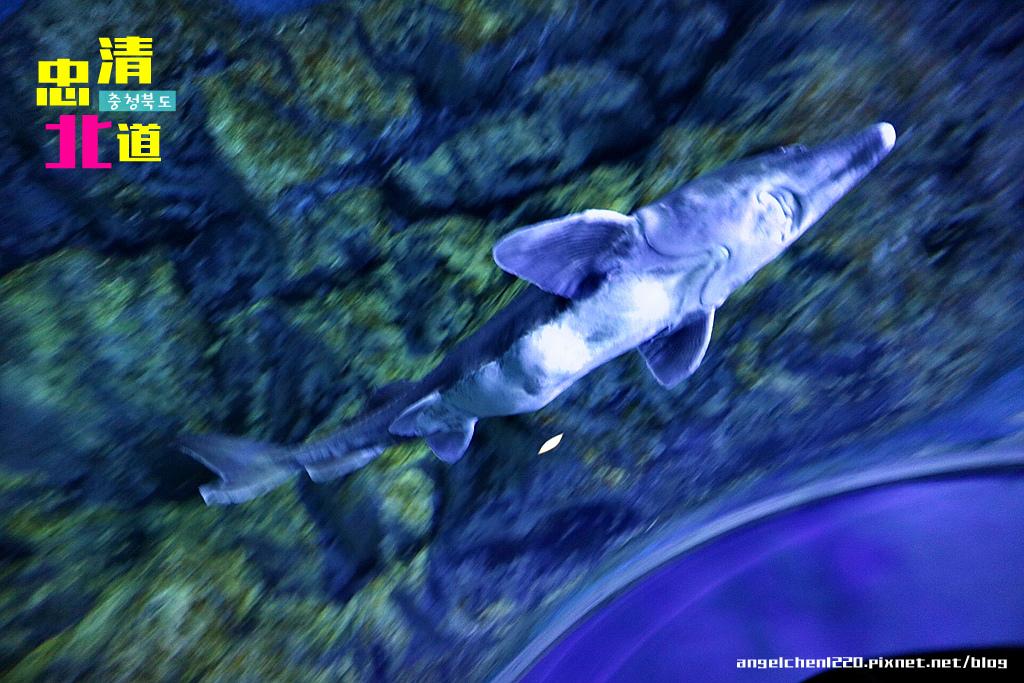 Danuri水族館-25.jpg