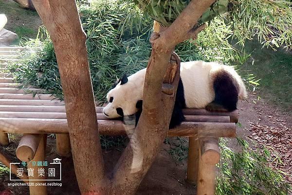 熊貓世界-10.jpg