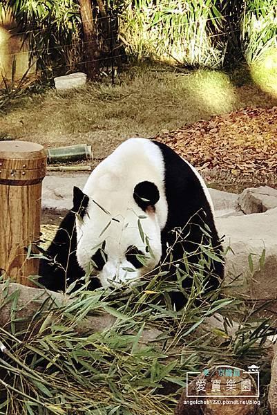 熊貓世界-12.jpg