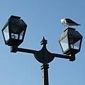 運河海鷗.jpg
