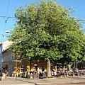 大樹下咖啡.jpg