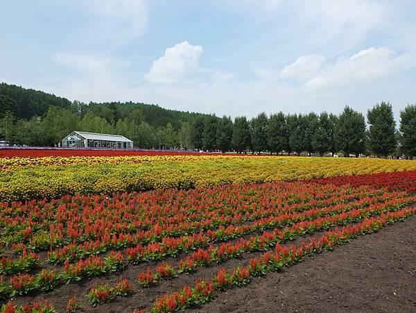 富田農場入口2.jpg