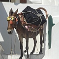 donkey taxi.JPG