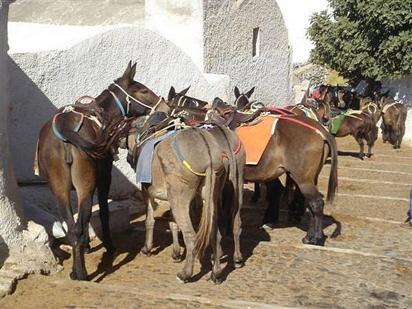 驢子群聚.JPG