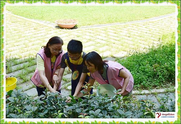 園藝05.jpg