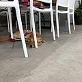台東玩耍_180527_0107.jpg