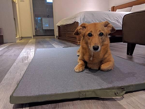 Lifeapp寵物折疊墊