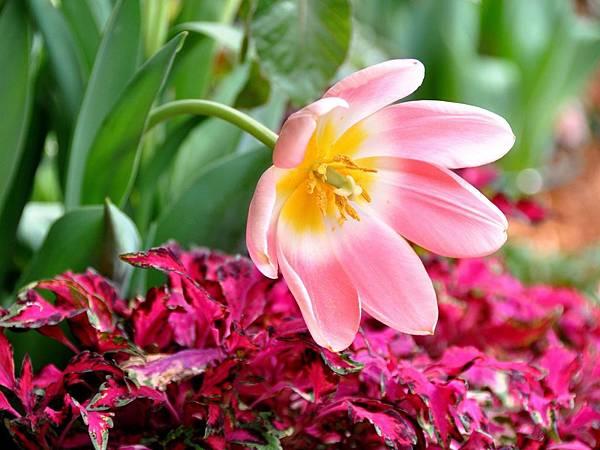 花朵 (01)